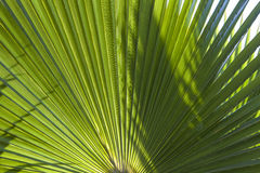 Structure of palm tree in morning Royalty Free Stock Images