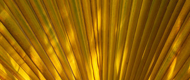 Structure of palm tree in morning sun Stock Image