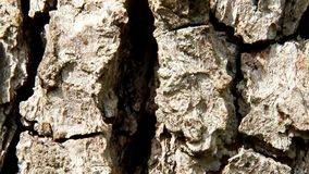 Structure of pear tree bark. Close up look of structure pear tree bark stock video footage