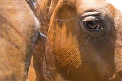 Horses eye closeup. Royalty Free Stock Image