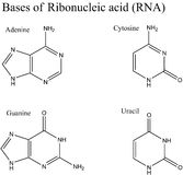 Structure of RNA nucleobases Royalty Free Stock Photos