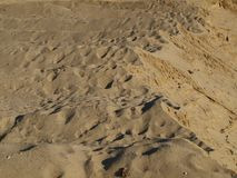 Structure of the sand. South Bohemia, Czech Republic Royalty Free Stock Photos