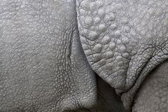 Structure of the skin of an Indian rhinoceros Stock Photos