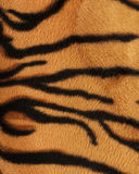 Structure of a skin of a tiger, striped. Background royalty free stock photos