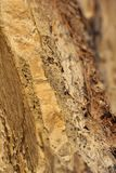 Structure. Of stone at seaside Royalty Free Stock Photography