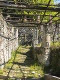 Structure suspendue pour la culture de la vigne Images stock