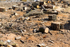 The structure of the tree in a section. Raw materials for heating the housing. Stock Photo