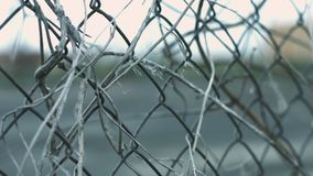 Wire mesh fence with dry plant stems moving on wind on background fenced area. Structure wire mesh fence with dry plant stems moving on wind on background fenced stock footage