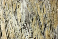 Petrified wood texture. The structure of the wooden surface that has petrified over time Stock Images