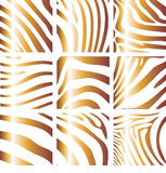 Structure of a zebra Stock Images