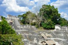 Structures du nord d'Acropole sur la plaza grande dans Tikal photographie stock libre de droits
