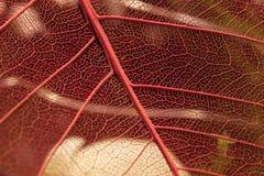 Structures en filigrane Image libre de droits
