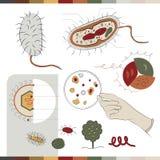 Structuur van bacteriën Stock Foto's