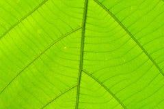 Structuur van blad natuurlijke achtergrond Royalty-vrije Stock Foto