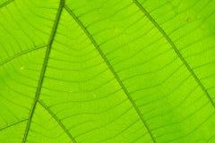 Structuur van blad natuurlijke achtergrond Royalty-vrije Stock Foto's