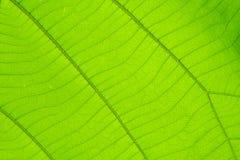 Structuur van blad natuurlijke achtergrond Stock Foto