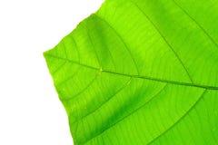 Structuur van blad natuurlijke achtergrond Royalty-vrije Stock Afbeelding