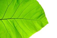 Structuur van blad natuurlijke achtergrond Royalty-vrije Stock Fotografie