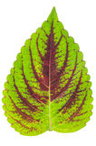 Structuur van bladachtergrond Royalty-vrije Stock Foto