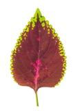 Structuur van bladachtergrond Royalty-vrije Stock Afbeeldingen