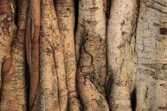 Structuur van boom stock foto