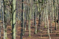 Structuur van bos in wintertijd Royalty-vrije Stock Foto