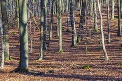 Structuur van bos in wintertijd Royalty-vrije Stock Afbeeldingen