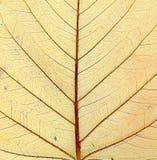 Structuur van de herfstblad. Macro. Stock Afbeelding