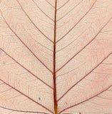 Structuur van de herfstblad. Macro. Stock Foto's