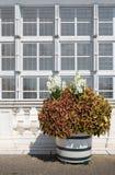 Structuur van de vensters met een bloempot Stock Afbeeldingen