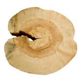 Structuur van een boom. stock fotografie