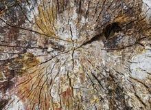 Structuur van een boomstomp stock afbeeldingen