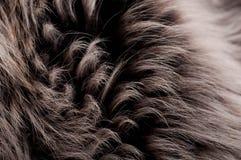 Structuur van een huid van een wolf Stock Fotografie
