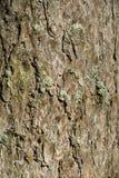 Structuur van een schors van een boom Royalty-vrije Stock Fotografie