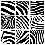Structuur van een zebra Royalty-vrije Stock Fotografie