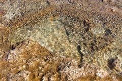 Structuur van kust overzeese steen royalty-vrije stock fotografie