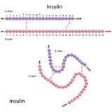 Structuur van menselijke insuline Stock Afbeeldingen