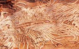 Structuur van oud ziek hout Stock Afbeelding