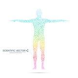 Structuurmolecule van de mens Abstracte model menselijk lichaamsdna Geneeskunde, wetenschap en technologie Wetenschappelijke Vect Stock Foto