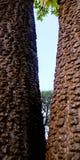 Structuurweergave tussen de foto van de boomstammenvoorraad royalty-vrije stock foto's