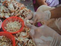 Strugający skorupę gotował się kraba mężczyzna w fabryce Zdjęcie Stock