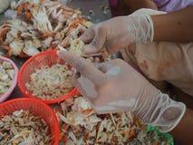 Strugający skorupę gotował się kraba mężczyzna w fabryce Zdjęcia Stock