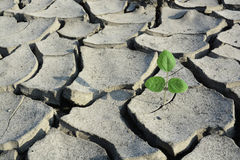 Struggle for life. A new plant struggle for life in harsh condition royalty free stock image