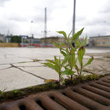 Struggle for survival. Of a plant on a railway platform in Magdeburg Stock Photos