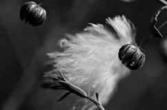 Struggled dreams. The feather was dancing in the wind, stacked at a flower Stock Photos