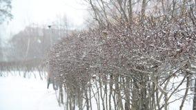 Struik in de winter tijdens een blizzard stock video