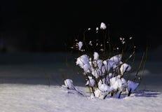 Struik die met sneeuw wordt behandeld stock foto