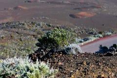 Struik die rotsachtig vulkaanlandschap overziet royalty-vrije stock foto's