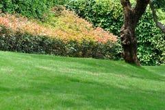 Struik met rode blad, bomen en weide Stock Fotografie