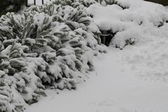 Struik onder partij van sneeuw royalty-vrije stock afbeeldingen